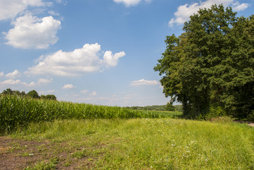 Rural scene - grassland, corn field and trees during summer