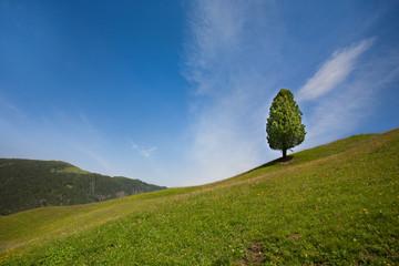 Paesaggio verde delle alpi