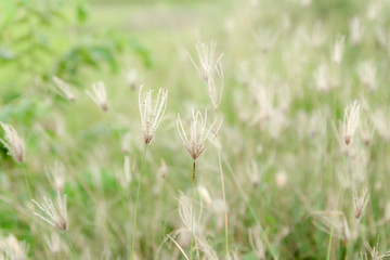Soft nature background