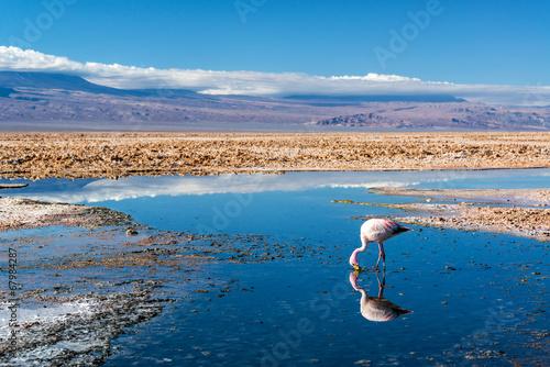 Papiers peints Lac / Etang Flamingo in Lake Chaxa