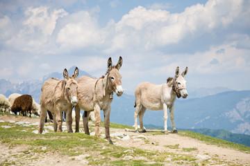 Donkeys in mountain