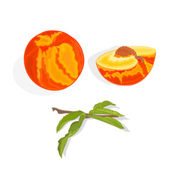 Peach with leaf, slice and half with bone vector