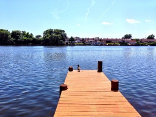 Duck on a Dock