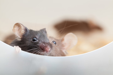 Two curious mouses