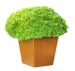 Garden pot with lush bushes isolated on white