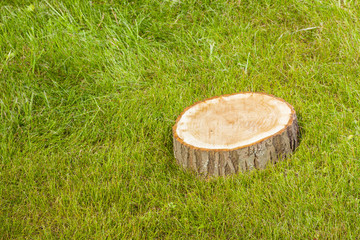tree stump on the grass