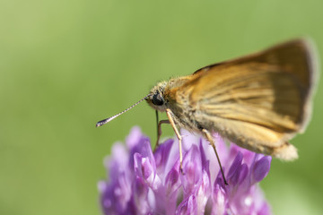Beautiful butterfly on a purple flower