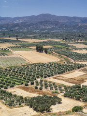 Olive valley on Crete