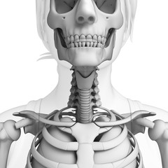 Female Throat artwork