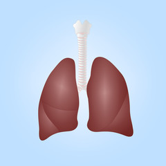 Realistic illustration of human lungs