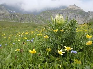 Montagna Fiorita