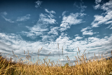 Beautiful sky with clouds and grass