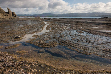 rock pools at Omaha Bay, New Zealand