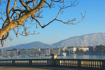 A árvore de Genebra