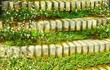 草が生えた階段