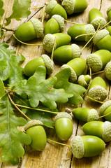 Quercus Acorn Ghianda Bellota Żołądź Gland Agern Жёлудь
