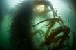 Kelp Growth