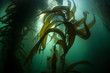 Forest of Giant Kelp