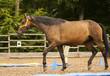 Pferd - 68004209