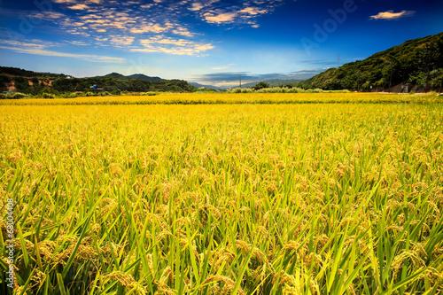 Plexiglas Beijing paddy field
