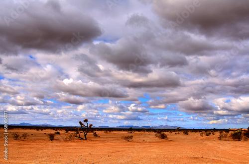 Sonora Desert - 68006071