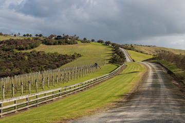 vineyard on grassy slope