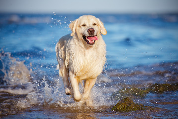 hsppy dog in the water