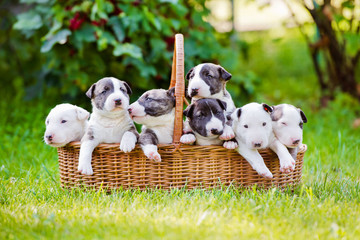 group of one month old puppies