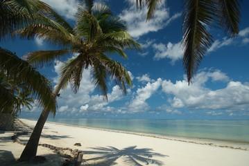 Under a Palm