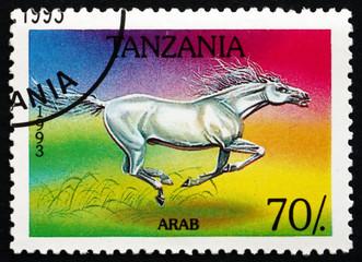 Postage stamp Tanzania 1993 Arab Horse