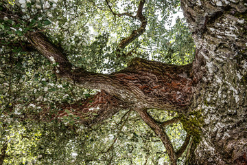 old tree detail