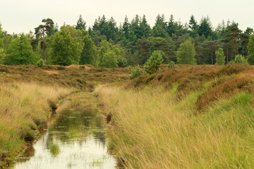 Stream running through heathland