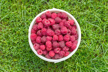 Red, fresh berry raspberry in a bucket