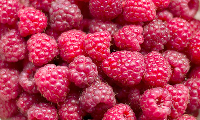 The texture - red, fresh berry raspberry is picked