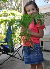 little girl holding fresh carrot