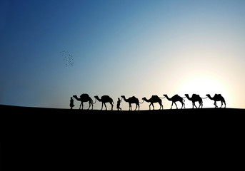 camels in the morning.