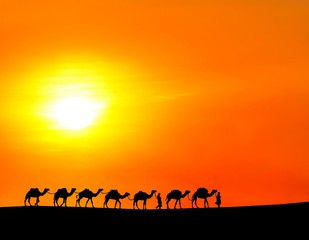 camels in the sunset background.