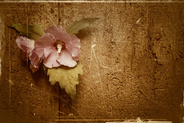 Flower on old wooden background