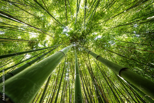Aluminium Bamboe bamboo forest - fresh bamboo background