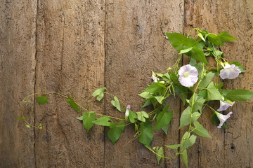Flowers and wooden wall background