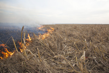 Fire on crops field