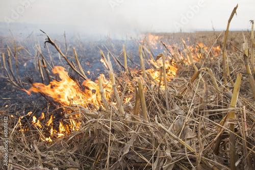 Fire on harvested corn maize field - 68018412