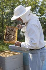 Beekeeper checking bee colony