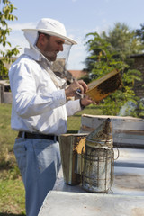 Beekeeper inspects honey bee colony
