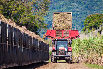 Tractor loading sugar cane onto train bin