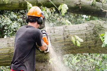 bäume werden im wald gesägt