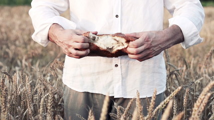 Man tear in half loaf of bread in wheat field