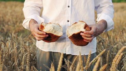 Man tear in half loaf of bread in wheat field, super slow motion