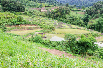 Rice field terraces in doi inthanon, Ban Mae Klang Luang Chiangm