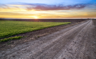 Rural road and green wheat field over sunset